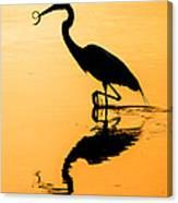 Sunset. Great Blue Heron. Canvas Print