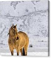 Sunset Horse In Montana Canvas Print