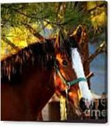Sunset Horse Canvas Print