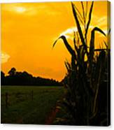 Sunset In The Cornfield Canvas Print