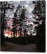 Sunset In The Pines Canvas Print