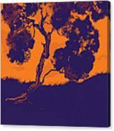 Sunset Madrone Canvas Print