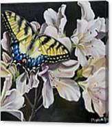 Sunset On A Swallowtail Canvas Print