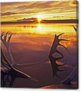 Sunset On Caribou Antlers In Whitefish Lake Canvas Print