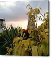Sunset On Leaves Canvas Print