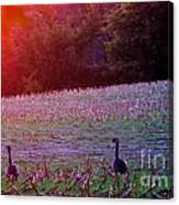 Sunset On Mallards Canvas Print