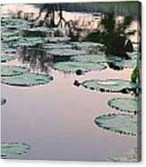 Sunset On Pond Lily Pads Canvas Print