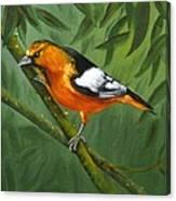 Sunset Orange Canvas Print