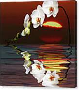 Sunset Orchids Canvas Print
