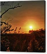 Sunset Over Little Lagoon Bayou Canvas Print