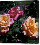 Sunset Painted In Roses Canvas Print