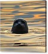 Sunset Seal Canvas Print