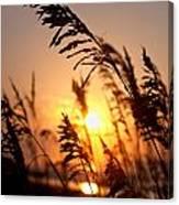Sunset Seaoats Canvas Print