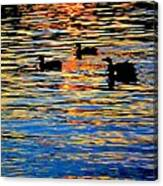 Sunset Swim Canvas Print
