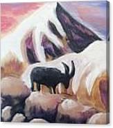 Sunset Swiss Goat Canvas Print