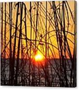 Sunset Through Grasses Canvas Print