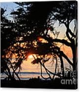 Sunset Through The Cypress Trees Cambria Canvas Print