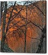 Sunset Through The Forest Canvas Print