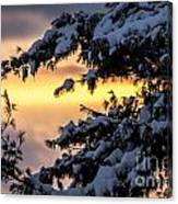 Sunset Through The Snowy Branches Canvas Print