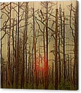 Sunset Thru The Pine Barrens Canvas Print
