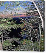 Sunset Thru The Pines Canvas Print
