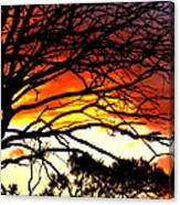Sunset Tree Silhouette Canvas Print