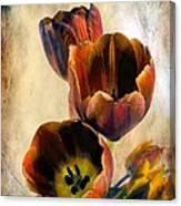 Sunset Tulips Canvas Print