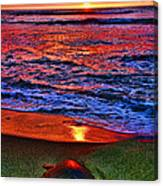 Sunset Turtle By Diana Sainz Canvas Print