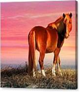 Sunset Wild Canvas Print