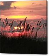 Sunset With Sea Oats Canvas Print