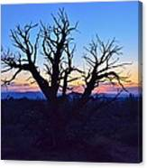 Sunset With Tree Silhouette Canvas Print
