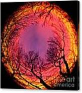 Sunset World Of Trees Canvas Print