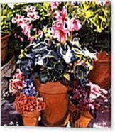 Sunshine And Flowerpots Canvas Print