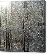 Sunshine And Snow Canvas Print
