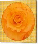 Sunshine Begonia Canvas Print