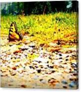 Sunshine Butterfly Canvas Print