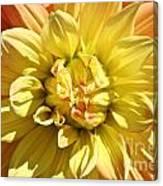 Sunshine Dahlia Canvas Print