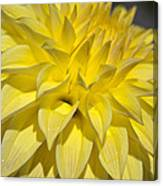Sunshine Dahlia Canvas Print