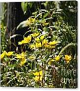 Sunshine Flower 3 Canvas Print