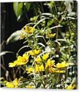 Sunshine Flowers Canvas Print