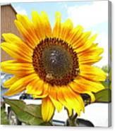 Sunshine In Country Farm Canvas Print
