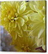 flower - Sunshine in Petals Canvas Print