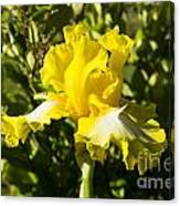 Sunshine Iris Canvas Print