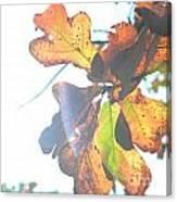 Sunshine Leaves Canvas Print