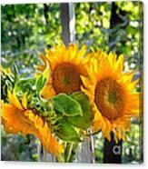 Sunshine Morning  Canvas Print