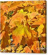 Sunshine Of Fall Canvas Print