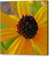 Sunshine On Susan Canvas Print