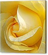 Sunshine Rose Canvas Print
