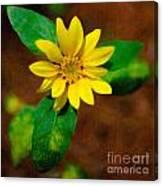 Sunshine Yellow Canvas Print