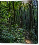 Sunstar Along The Trail Canvas Print